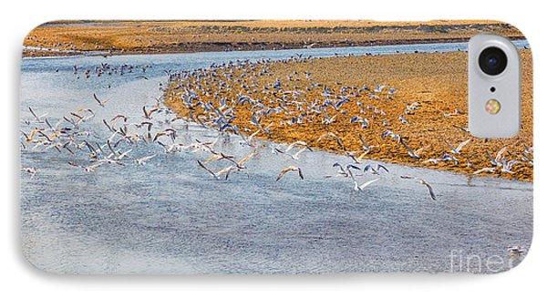 Seagulls On Buzau Riverbank IPhone Case by Gabriela Insuratelu
