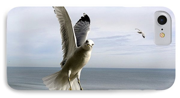 Inquisitive Seagull IPhone Case by Richard Rosenshein
