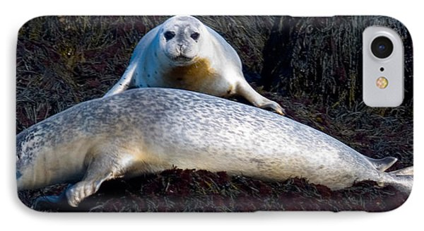 Seal Massage 5662 Phone Case by Brent L Ander