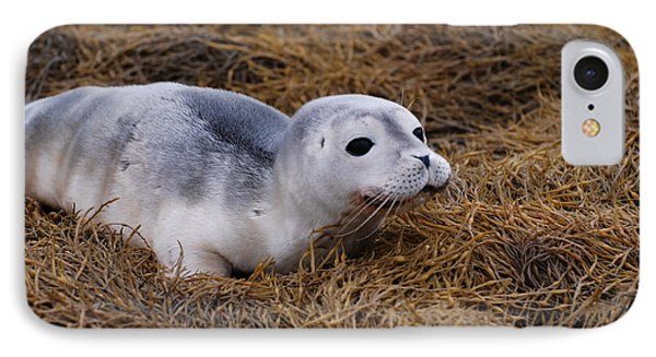 Seal Pup IPhone Case by DejaVu Designs