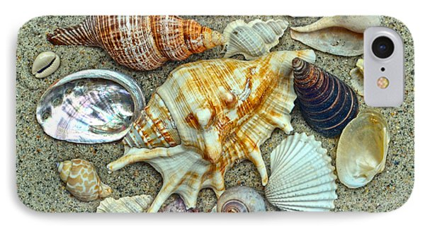 Seashells Collection IPhone Case by Sandi OReilly