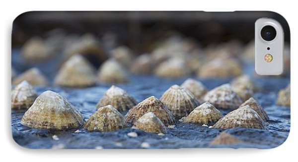 Seashells On A Rock  South Shields IPhone Case by John Short