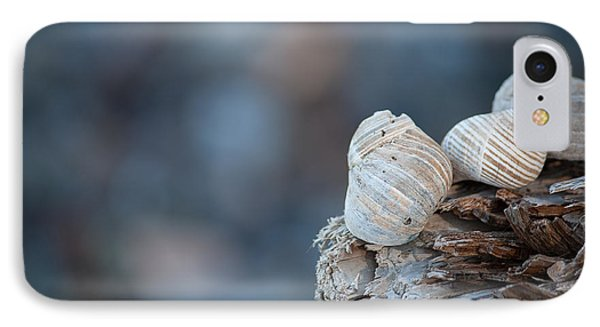 Seashells On Driftwood  Phone Case by Brian Boudreau