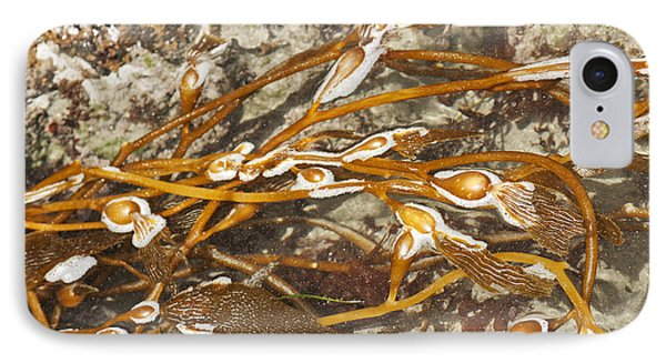 Seaweed Swirls Phone Case by Artist and Photographer Laura Wrede