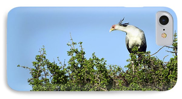IPhone Case featuring the photograph Secretary Bird Stretch by AnneKarin Glass