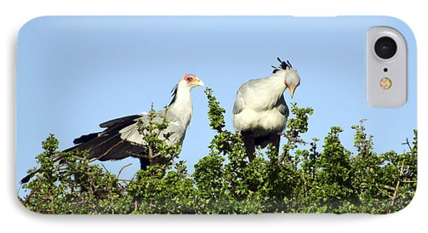 IPhone Case featuring the photograph Secretary Couple Inspect Nest by AnneKarin Glass