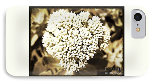 Sedum In The Heart IPhone Case by Kimberlee Baxter