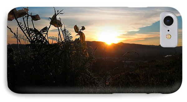 Seedpods At Sundown IPhone Case by Paul Foutz