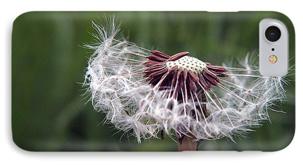 IPhone Case featuring the photograph Seeds And Stems by Suzy Piatt