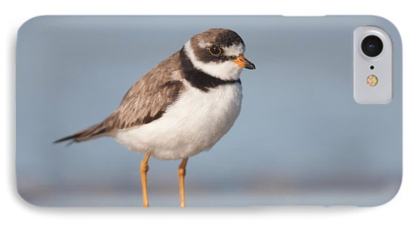Semipalmated Plover IPhone 7 Case by Clarence Holmes