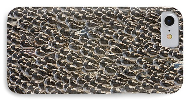 Semipalmated Sandpipers Sleeping IPhone 7 Case by Yva Momatiuk John Eastcott