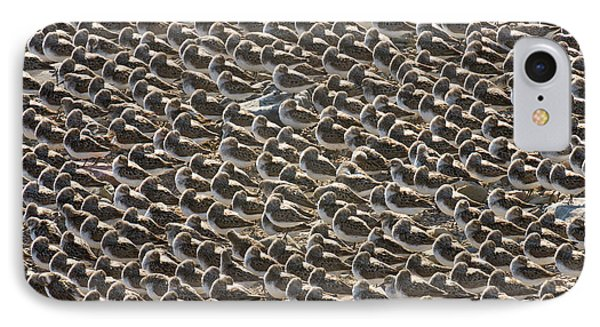Semipalmated Sandpipers Sleeping IPhone Case by Yva Momatiuk John Eastcott