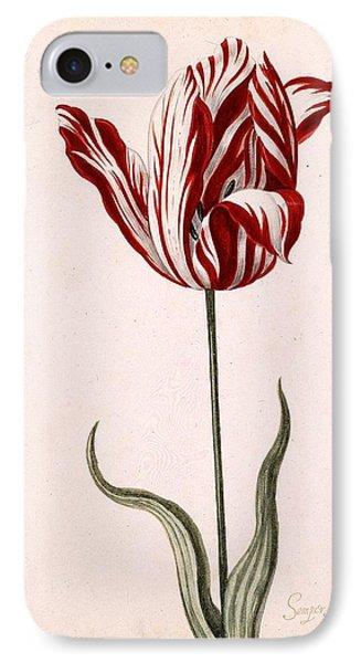 Tulip iPhone 7 Case - Semper Augustus by Celestial Images