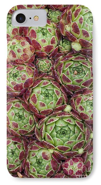 Sempervivum Atlanticum Pattern IPhone Case by Tim Gainey