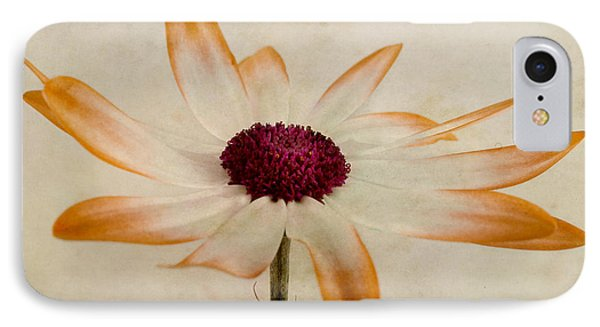 Senetti Pericallis Orange Tip IPhone Case