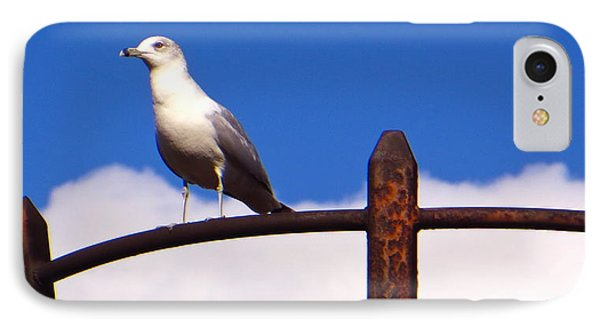 Sentinel Sea Gull IPhone Case by Joy Hardee