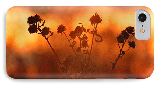 IPhone Case featuring the photograph September Sonlight by R Thomas Brass