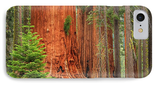 Sequoias IPhone Case by Inge Johnsson