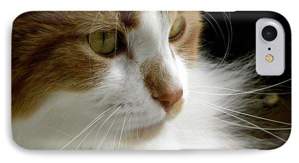 Serious Gato 1 Phone Case by Julie Palencia