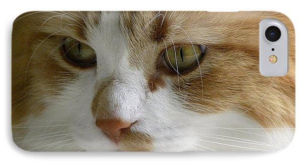 Serious Gato 3 Phone Case by Julie Palencia