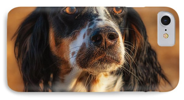 Setter Heaven IPhone Case by Reflections Afield Photography - Steve Hill