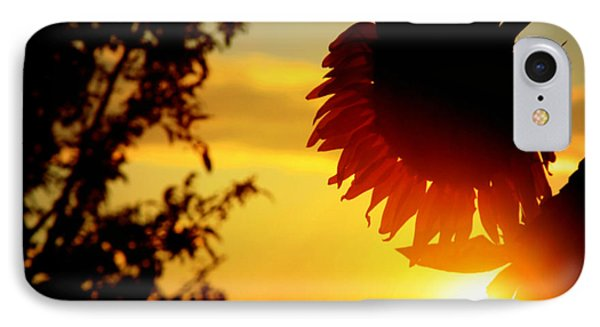 IPhone Case featuring the photograph Setting Sunflower by Aurelio Zucco