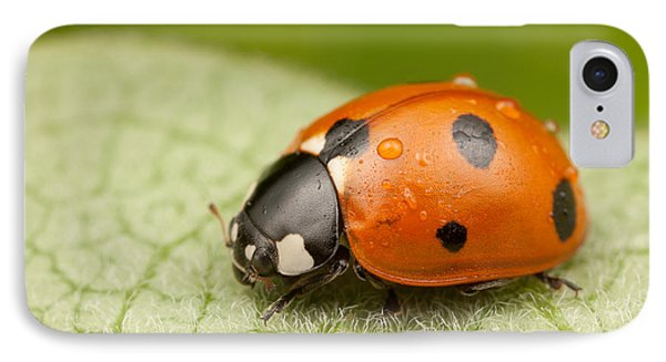 Seven-spotted Lady Beetle II IPhone Case by Clarence Holmes