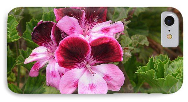 IPhone Case featuring the photograph Shades Of Pink by Lew Davis