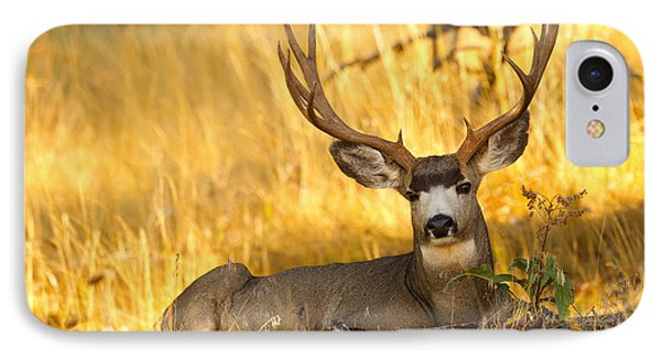 IPhone Case featuring the photograph Shady Buck by Aaron Whittemore