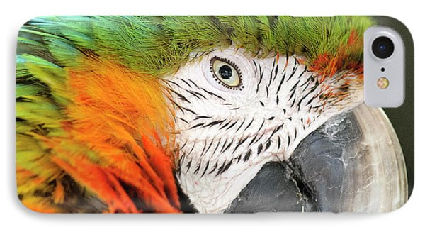Shamrock Macaw, First Generation Hybrid IPhone Case by Matt Freedman