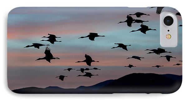 Sandhill Cranes Landing At Sunset 2 IPhone Case by Avian Resources