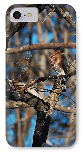Sharp Shinned Hawk IPhone Case by Mim White