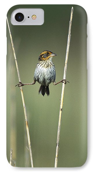 Sharp-tailed Sparrow On Reeds Long IPhone Case by Tom Vezo