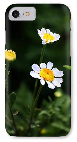 IPhone Case featuring the photograph Shasta Daisies by Richard Stephen