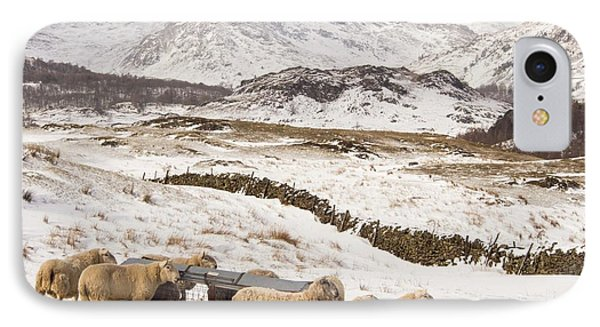 Sheep Brave The Extreme Weather IPhone Case by Ashley Cooper