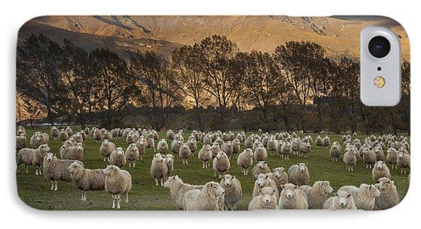 Sheep Flock At Dawn Arrowtown Otago New IPhone Case by Colin Monteath, Hedgehog House