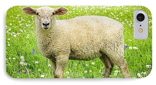 Sheep iPhone 7 Case - Sheep In Summer Meadow by Elena Elisseeva