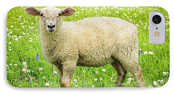 Sheep In Summer Meadow Phone Case by Elena Elisseeva