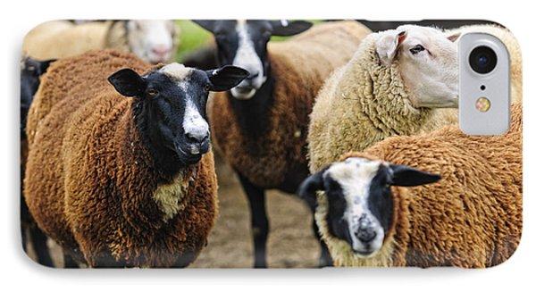 Sheep On A Farm Phone Case by Elena Elisseeva