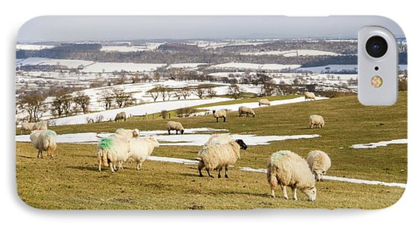Sheep On Hope Bowdler Hill IPhone Case by Ashley Cooper