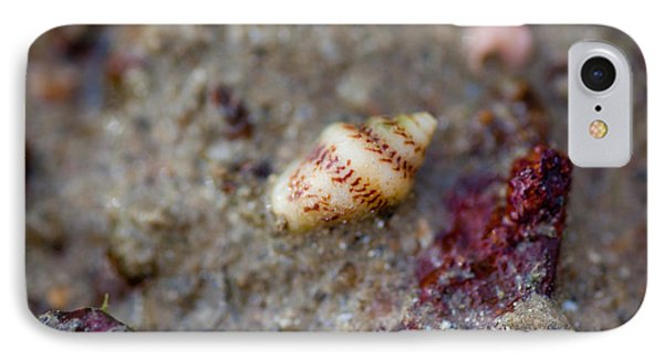 Shell Alone IPhone Case by Carole Hinding