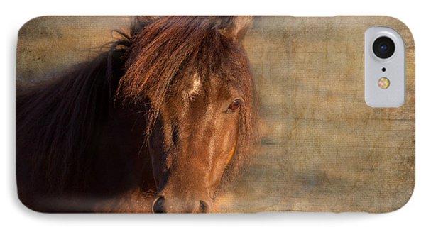 Shetland Pony At Sunset IPhone Case