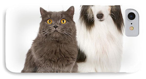 Shetland Sheepdog And Gray Cat IPhone Case by Susan Schmitz
