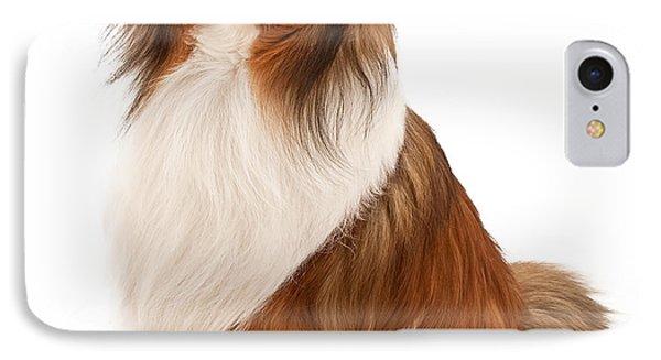 Shetland Sheepdog Isolated On White IPhone Case