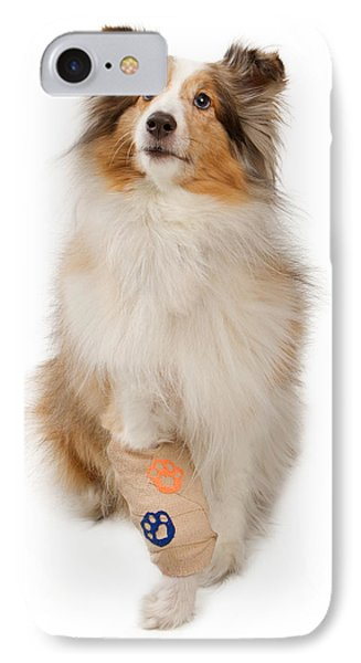 Shetland Sheepdog With Injured Leg IPhone Case by Susan Schmitz