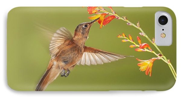 Shining Sunbeam Hummingbird IPhone Case
