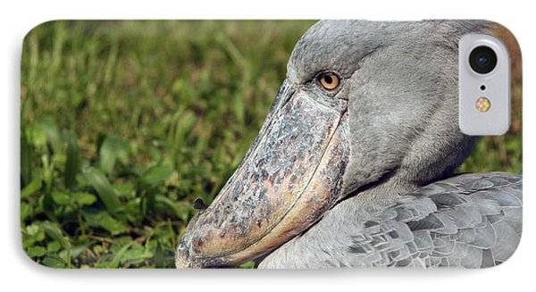 IPhone Case featuring the photograph Shoebill Balaeniceps Rex by Liz Leyden