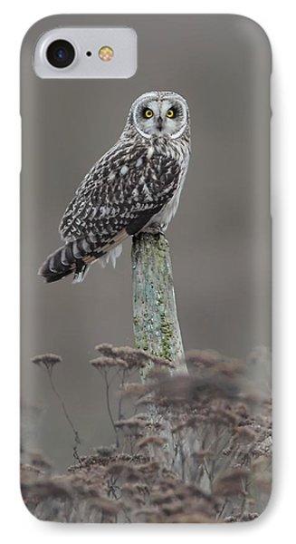 Short Ear Owl IPhone Case by Daniel Behm