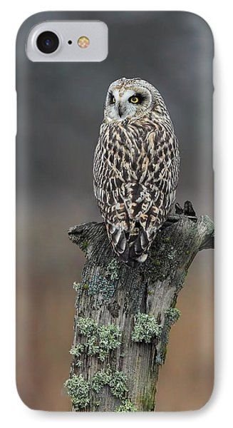 Short Eared Owl Perched IPhone Case by Daniel Behm