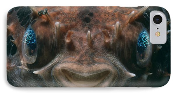Short-spined Porcupine Fish IPhone Case